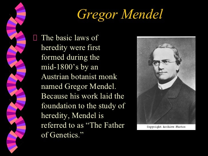 Gregor Mendel <ul><li>The basic laws of heredity were first formed during the mid-1800's by an Austrian botanist monk name...