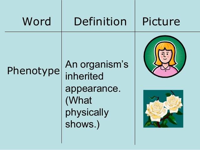 genotype definition - photo #23