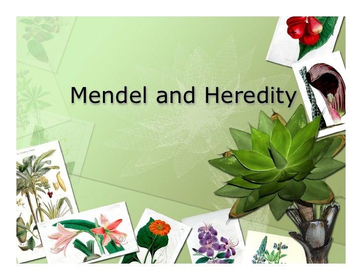 Mendel and Heredity