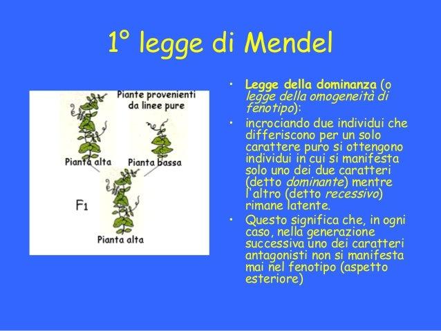 Mendel e l ereditariet - Due caratteri diversi ...