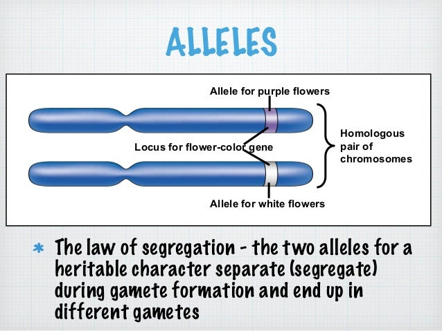 Mendelian genetics lecture quiz different gametes 39 ccuart Choice Image