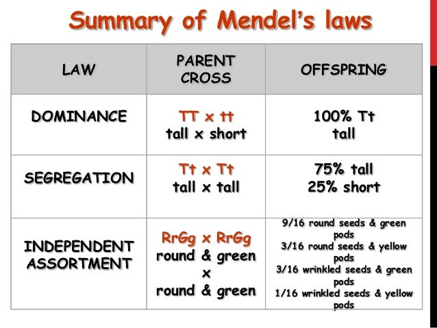 Mendel's 3 Laws Related Keywords - Mendel's 3 Laws Long ...