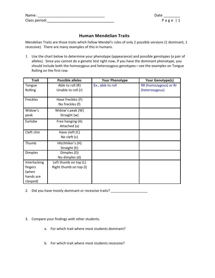 dominant and recessive traits worksheet geersc. Black Bedroom Furniture Sets. Home Design Ideas