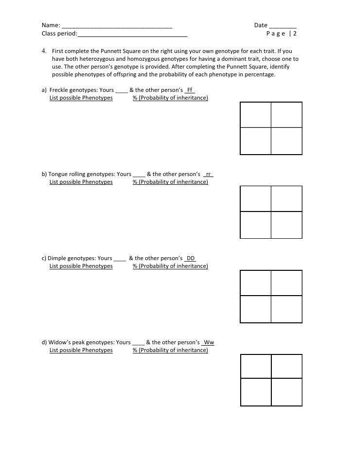 Mendelian Traits Activity – Punnett Square Worksheet Human Characteristics Answers