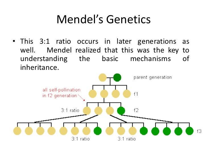 mendel law of inheritance pdf