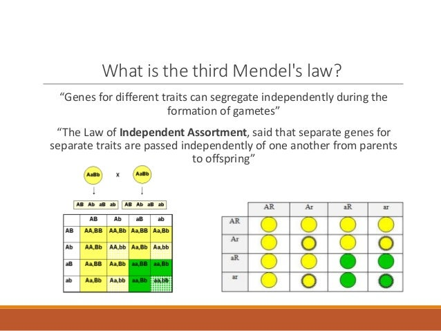 Seeds of doubt: Mendel's choice of Hieracium to study ...