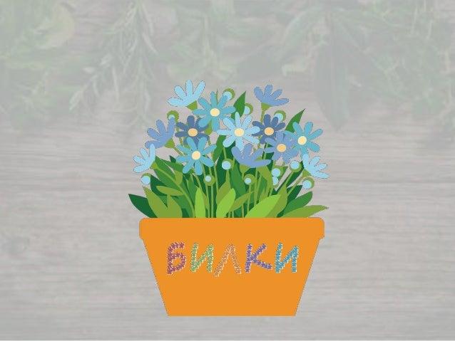 Билките, още наричани лечебни растения обхващат голяма група растения, които се използват в медицинската и ветеринарномеди...