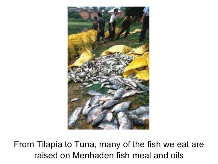 Menhaden presentation rev for Menhaden fish meal