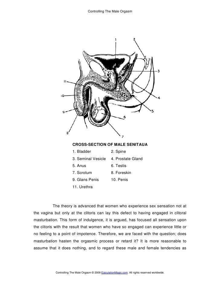 Controlling The Male Orgasm                              CROSS-SECTION OF MALE SENITAUA                          1. Bladde...