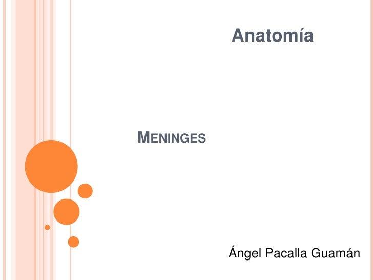 AnatomíaMENINGES           Ángel Pacalla Guamán
