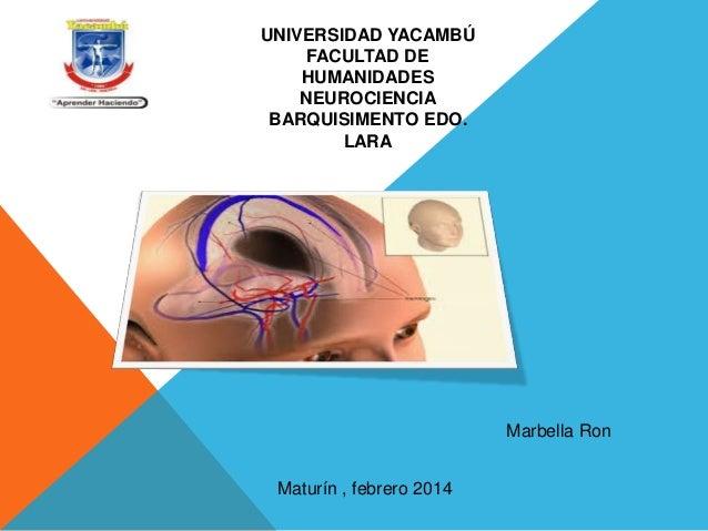 UNIVERSIDAD YACAMBÚ FACULTAD DE HUMANIDADES NEUROCIENCIA BARQUISIMENTO EDO. LARA  Marbella Ron Maturín , febrero 2014