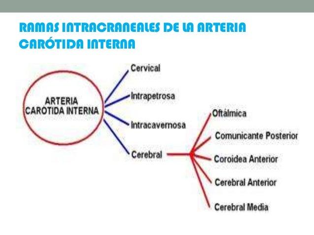 RAMAS INTRACRANEALES DE LA ARTERIA CARÓTIDA INTERNA