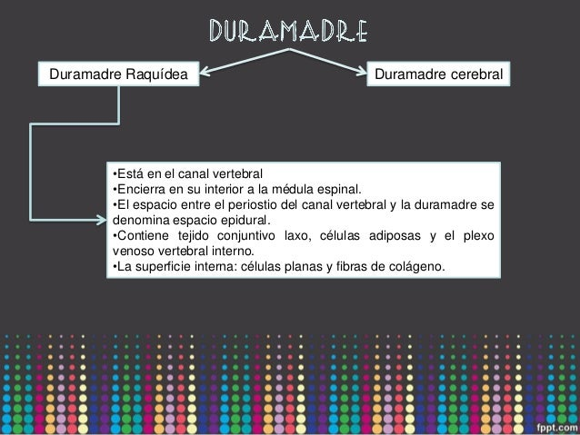 Meninges, sistema ventricular e irrigación encefálica Slide 3
