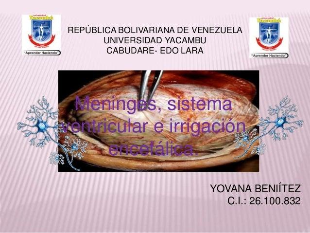 REPÚBLICA BOLIVARIANA DE VENEZUELA  UNIVERSIDAD YACAMBU  CABUDARE- EDO LARA  Meninges, sistema  ventricular e irrigación  ...