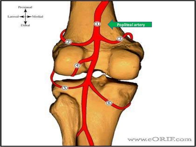 Meniscal Injury