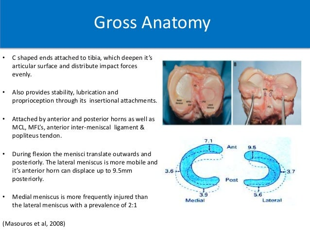 Meniscus Structure Role Injury