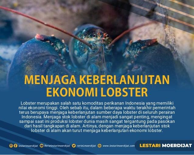 Lobster merupakan salah satu komoditas perikanan Indonesia yang memiliki nilai ekonomi tinggi. Oleh sebab itu, dalam beber...