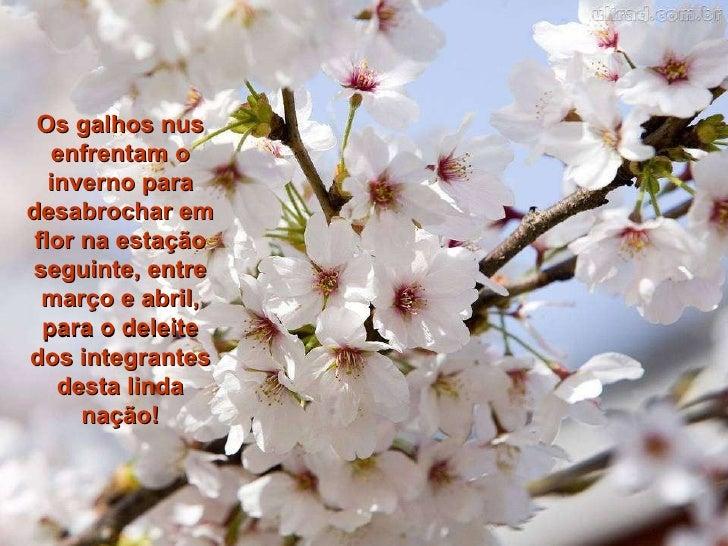 mensagem motivacional pnl a flor de laranjeira