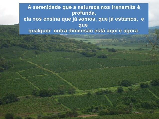 A serenidade que a natureza nos transmite é                  profunda,ela nos ensina que já somos, que já estamos, e      ...
