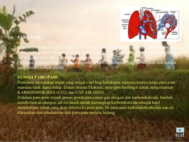 KELAINAN-KELAINAN PADA PARU-PARUKelainan-kelainan pada paru-paru, diantaranya adalah:1. Asma atau sesak nafas, yaitu kelai...