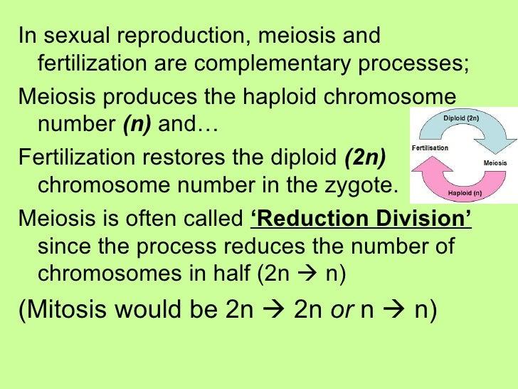 <ul><li>In sexual reproduction, meiosis and fertilization are complementary processes;  </li></ul><ul><li>Meiosis produces...