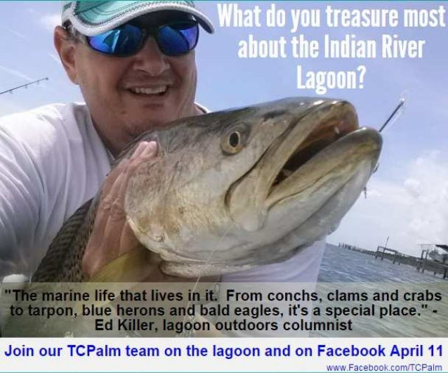 """The marine life that lives in it. "" From conchs,  clams and crabs to tarpon,  blue herons and bald eagles,  it's a specia..."