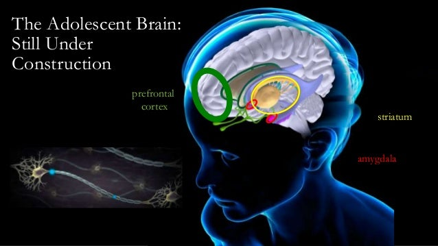 Prefrontal cortex activation in task switching: An event ...