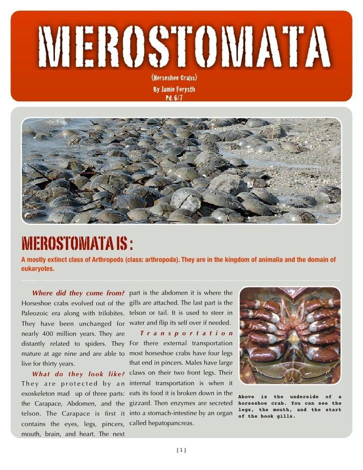 MEROSTOMATA                              (Horseshoe Crabs)                                                By Jamie Forysth...