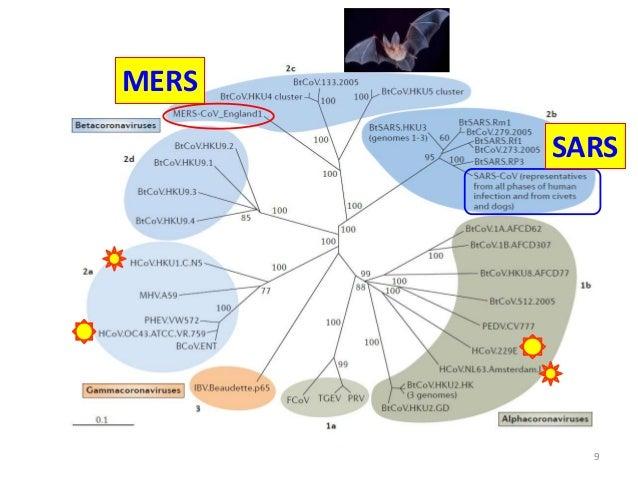 Nat Rev Microbiol 2013;11:836-48. MERS-CoV SARS 9 MERS