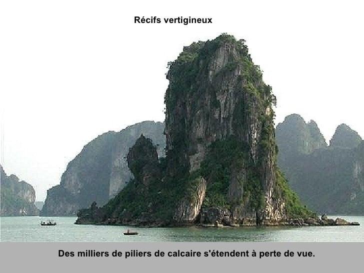 Récifs vertigineux Des milliers de piliers de calcaire s'étendent à perte de vue.
