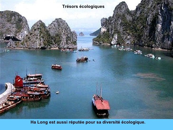 Ha Long est aussi réputée pour sa diversité écologique. Trésors écologiques