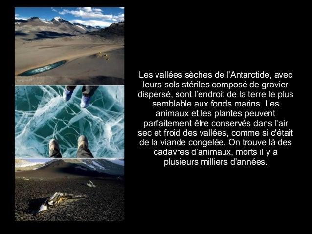 2. Île de Socotra (Océan Indien)