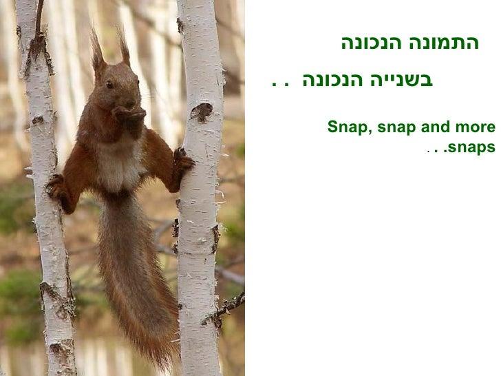 התמונה הנכונה Snap, snap and more snaps. .  .   בשנייה הנכונה  . .
