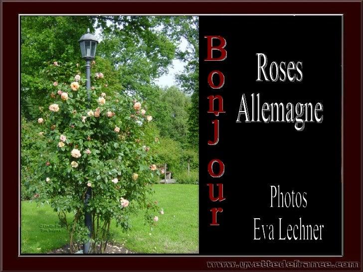 Bonjour Photos Eva Lechner Roses Allemagne