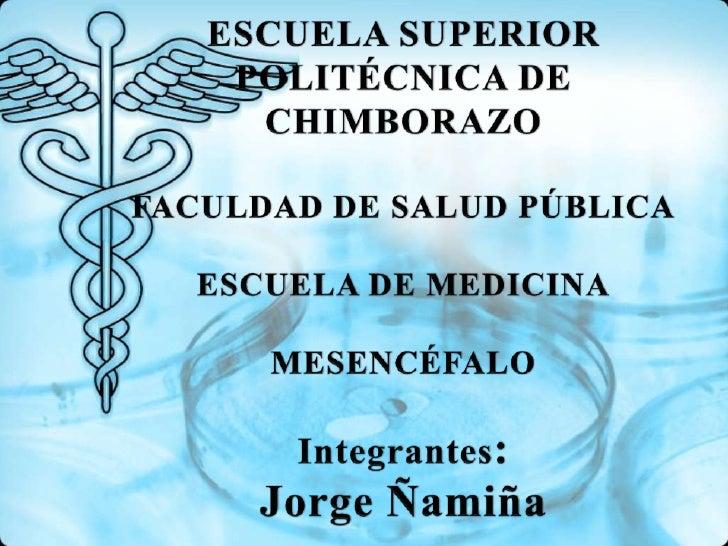 ESCUELA SUPERIOR POLITÉCNICA DE CHIMBORAZOFACULDAD DE SALUD PÚBLICAESCUELA DE MEDICINAMESENCÉFALOIntegrantes:Jorge Ñamiña<...