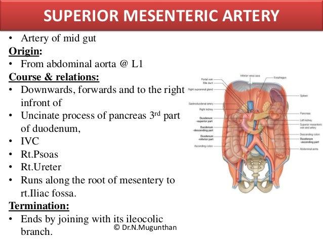 mesentery, jejunum, ileum & superior mesenteric artery -pdf lecture n…, Human body