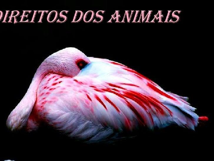 • Todos os animais têm direito à vida.      • Todos os animais têm direito ao      respeito e à proteção do homem.  • Nenh...