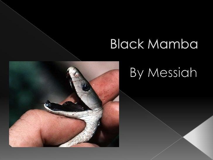 Black Mamba <br />By Messiah<br />