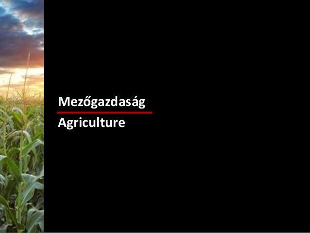 Mezőgazdaság Agriculture