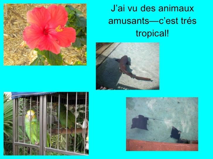 <ul><li>J'ai vu des animaux amusants—c'est trés tropical! </li></ul>
