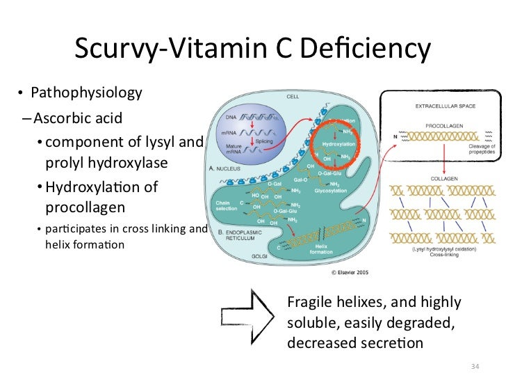 Diagram Of Scurvy - Collection Of Wiring Diagram •