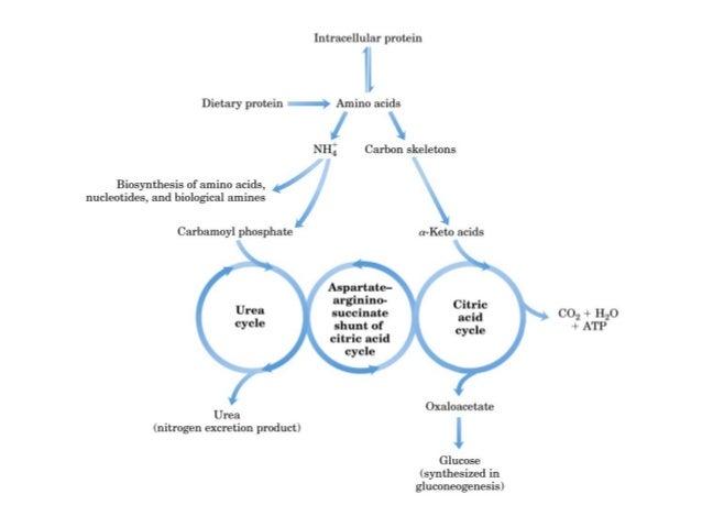 Pengertian Katabolisme, Proses dan Jenisnya Lengkap
