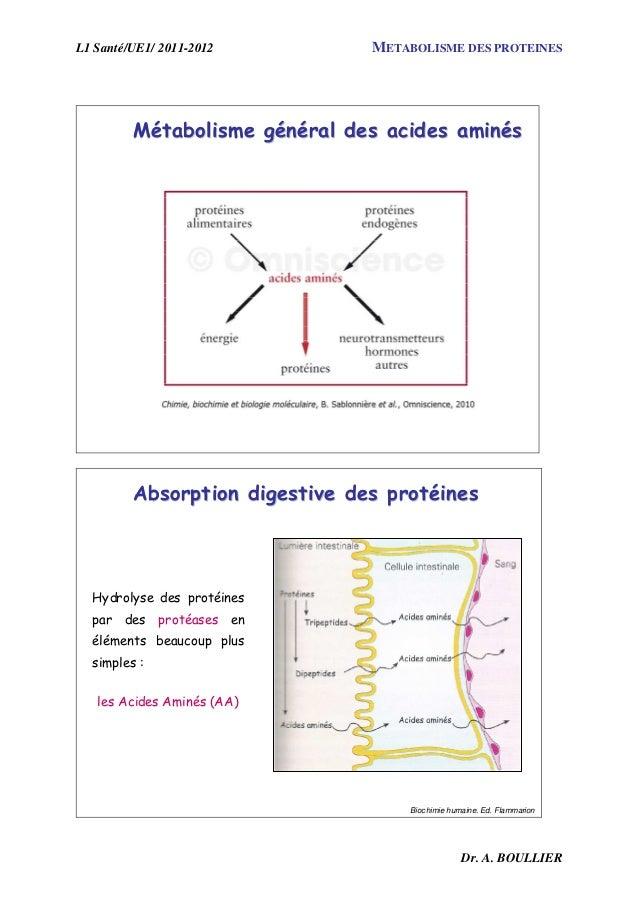 L1 Santé/UE1/ 2011-2012 METABOLISME DES PROTEINES Dr. A. BOULLIER MMéétabolisme gtabolisme géénnééralral desdes acides ami...