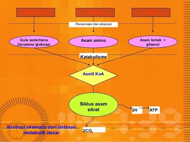 Penjelasan Lengkap Materi Sintesis, Jalur Metabolisme Lemak dan Gliserol