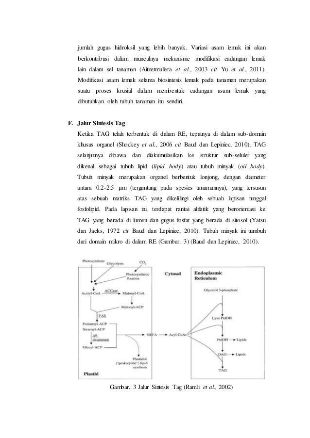 Proses Metabolisme pada Tumbuhan (Fisiologis Tumbuhan)