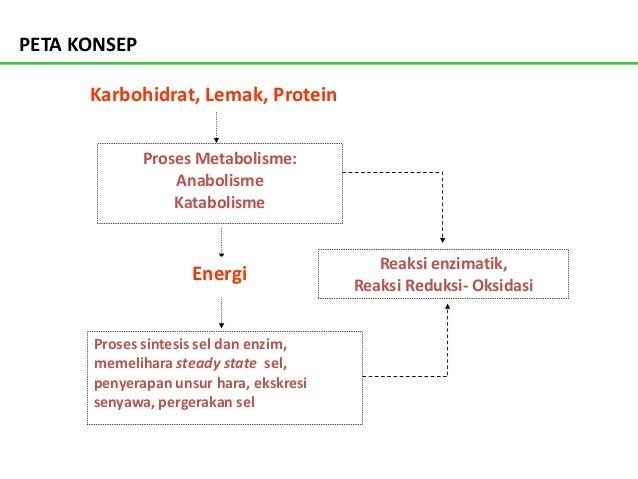 Anabolisme dan Katabolisme
