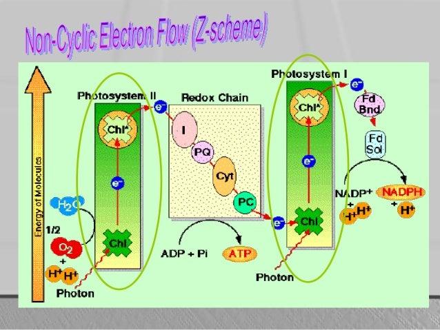 metabolisme mikroorganisme Mengganggu pertumbuhan dan metabolisme mikrobe mikroorganisme dengan cara merusak komponen selular, dan dengan cara pengikatan langsung klor dengan protein.