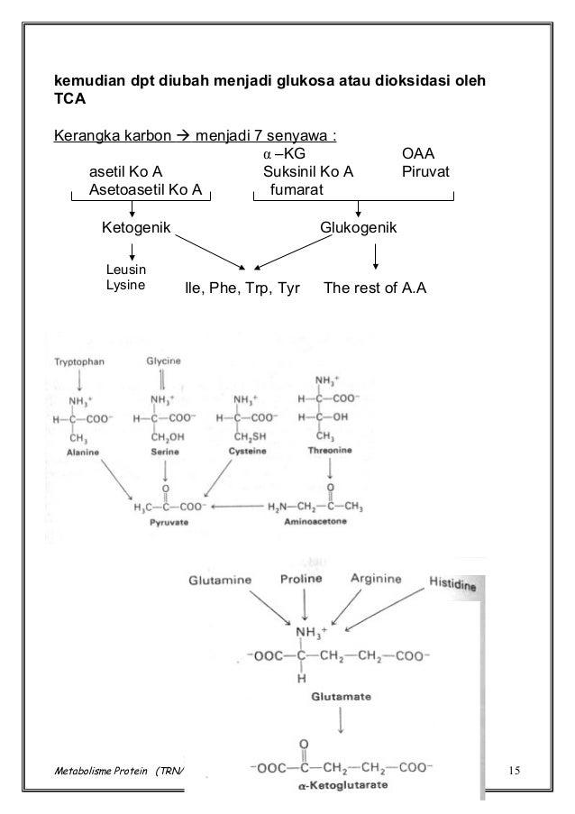 Jalur Metabolisme Metabolisme Oleh : Karmanto S.Si, M.Sc.