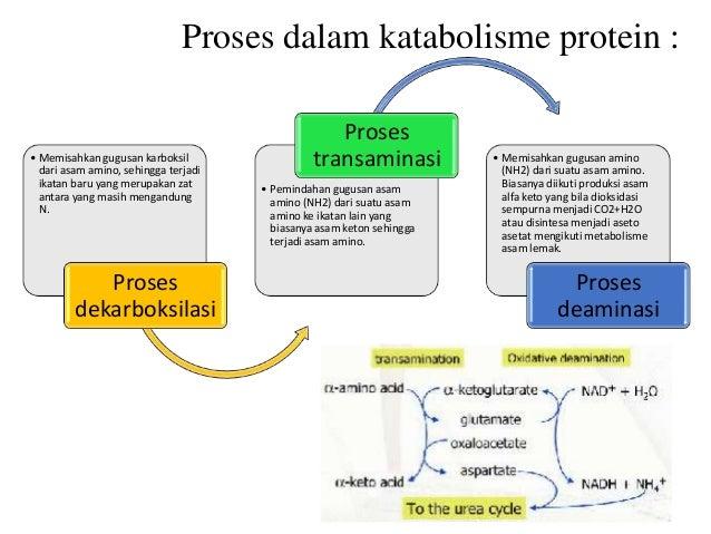 METABOLISME : Pengertian, Proses, Fungsi, Contoh (Lengkap)