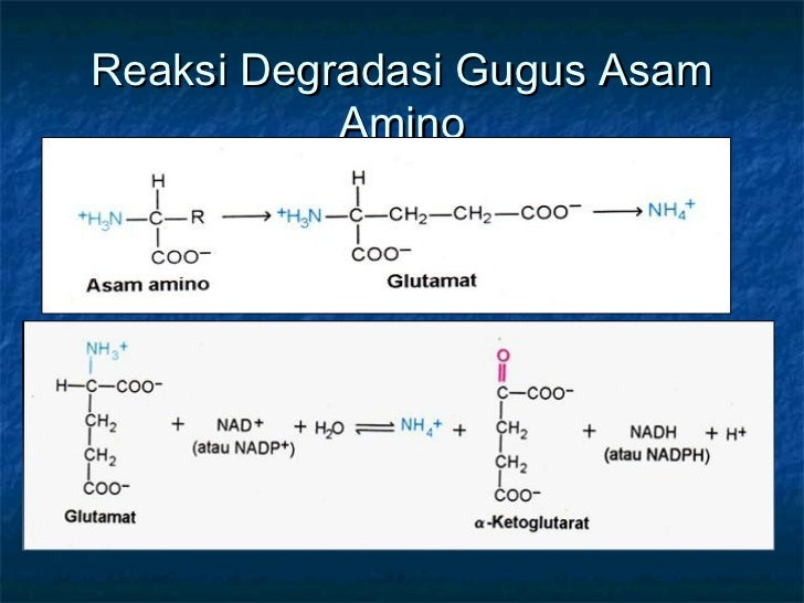 Mekanisme Katabolisme Protein Dan Nitrogen Asam Amino